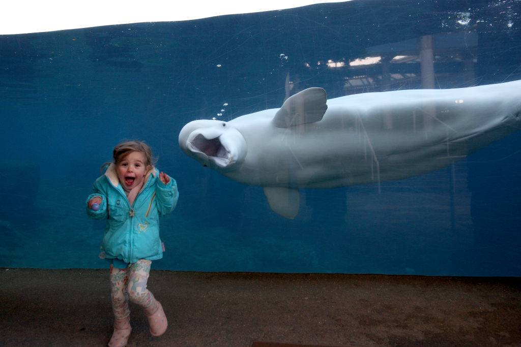 a young girl posing with a beluga whale making a funny face