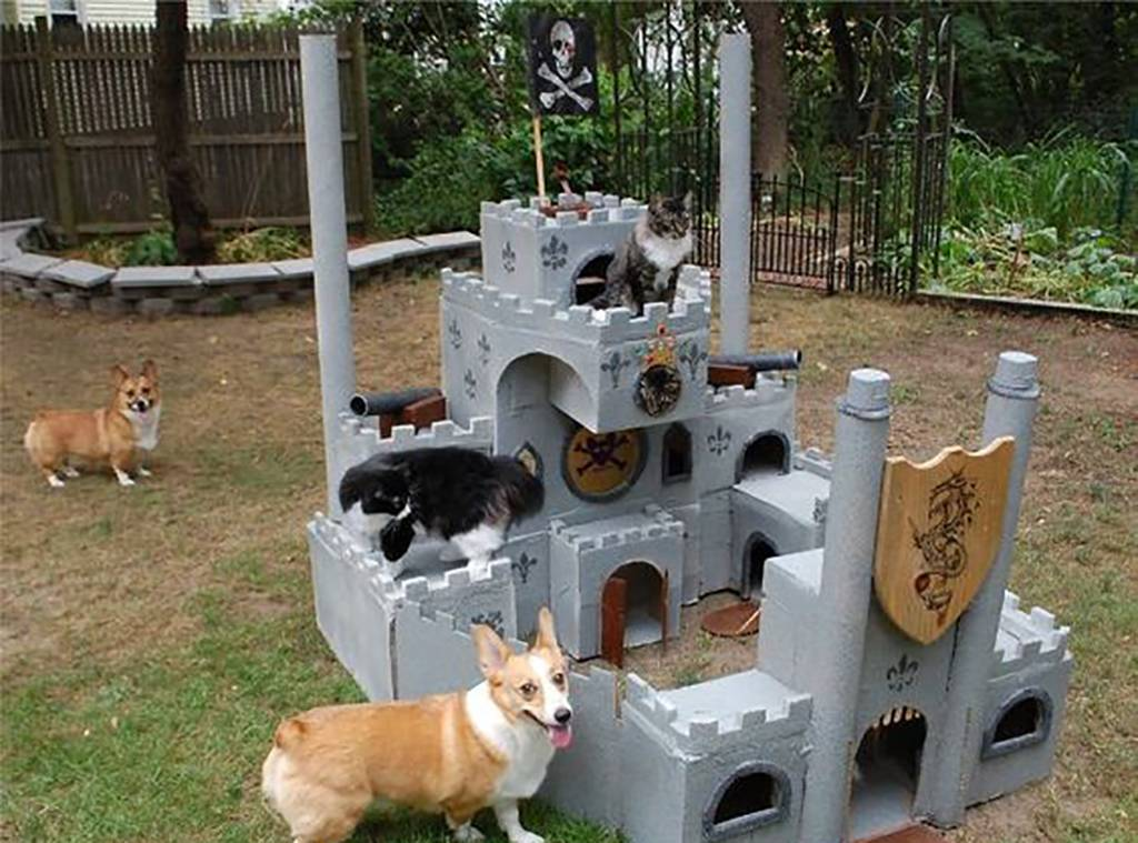 Cats in a fort with dogs