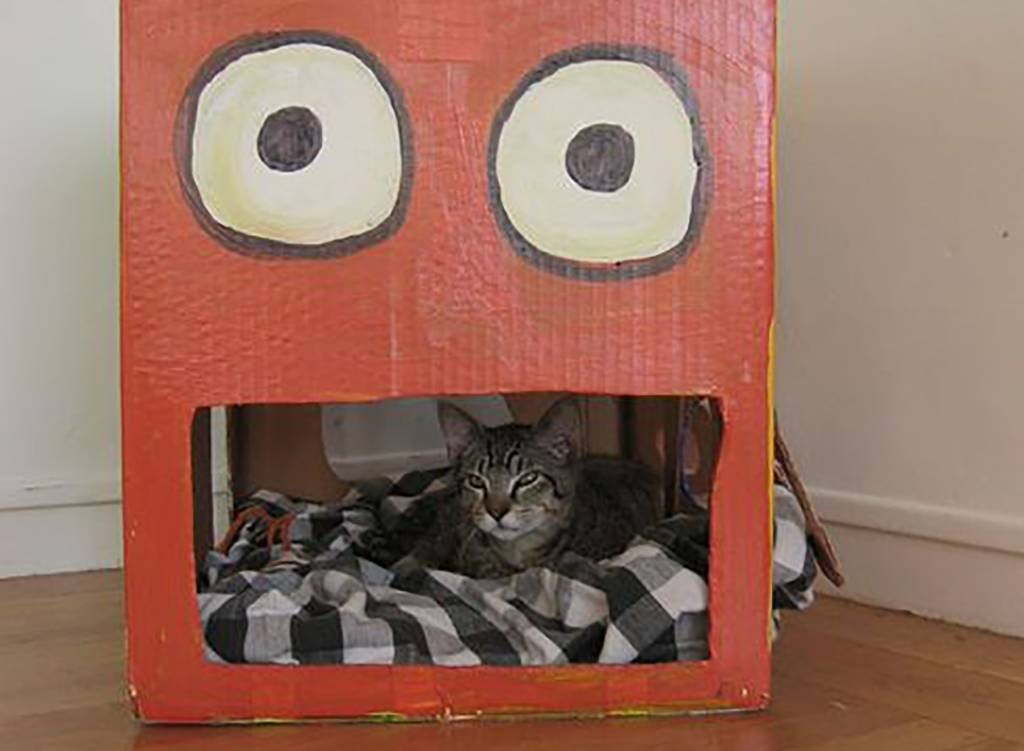 Cat in a painted box