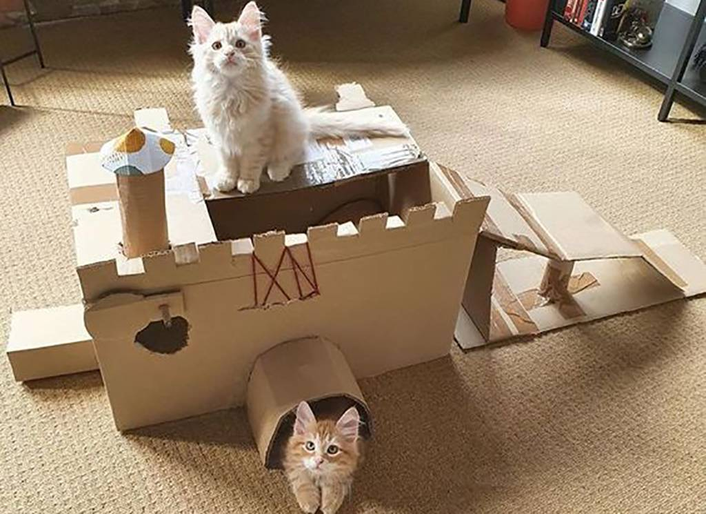 Two cats in a fort