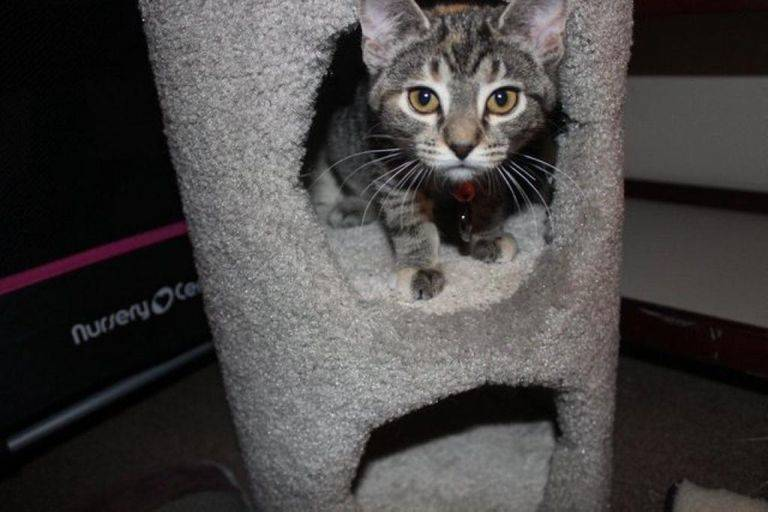 aphrodite-adopted-kitten
