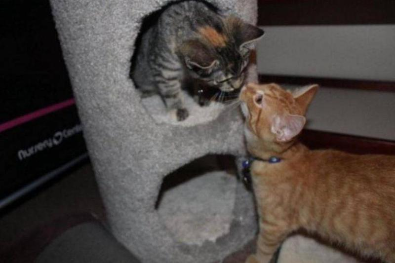 ares-aphrodite-together-kittens