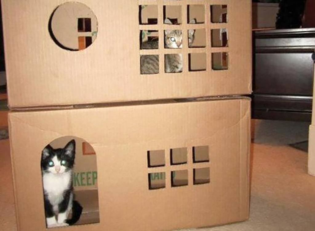 Two story cat house