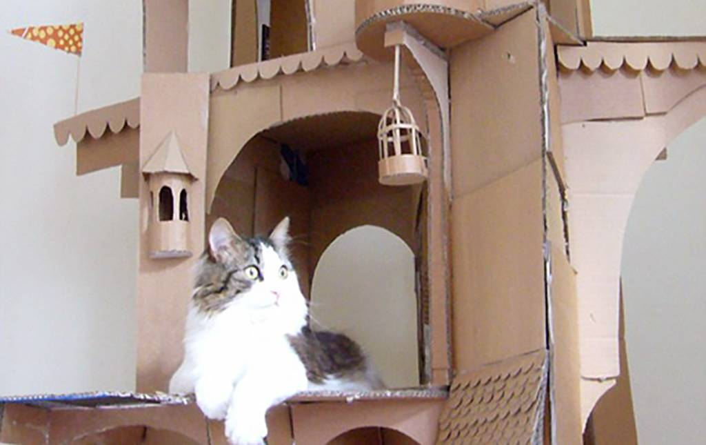 Cat in a fort