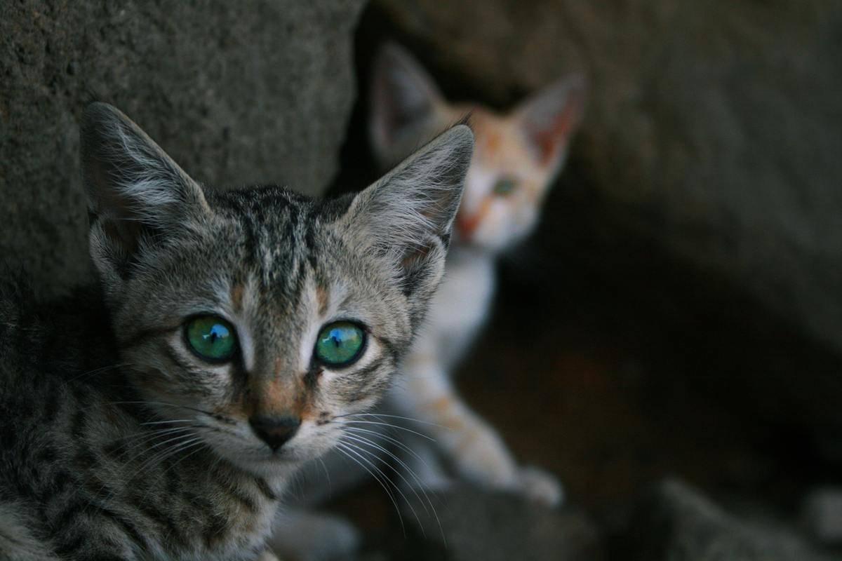 kitten-siblings-reunited