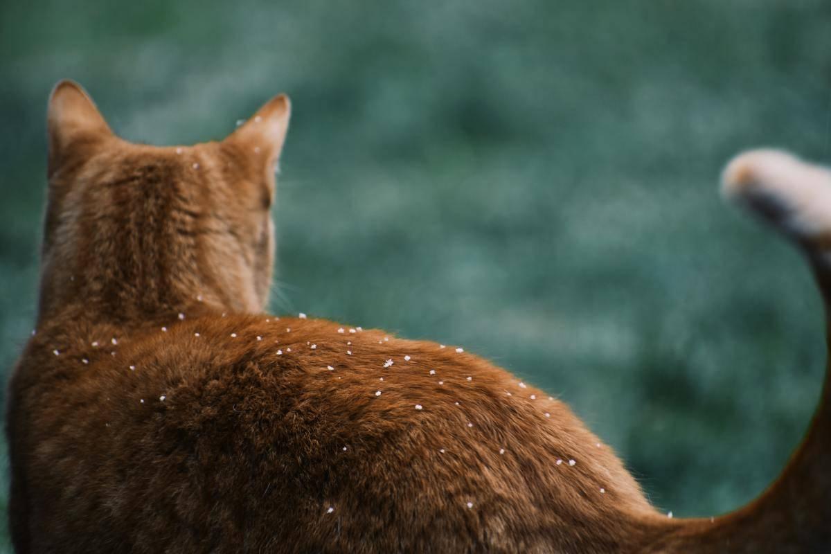 orange cat in the winter