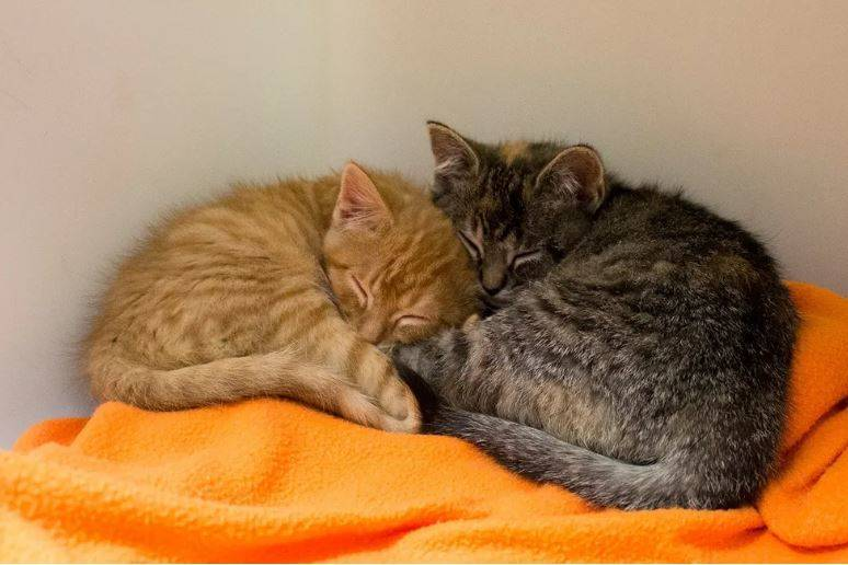 rescue-kittens-01