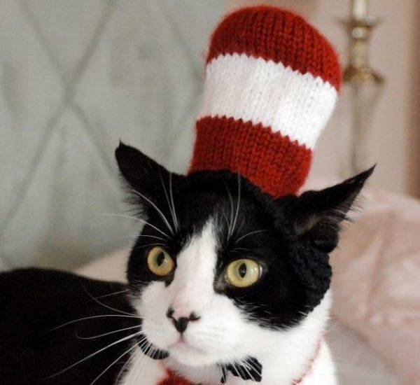 Check Out These Hilarious Halloween Costumes For Your Cat