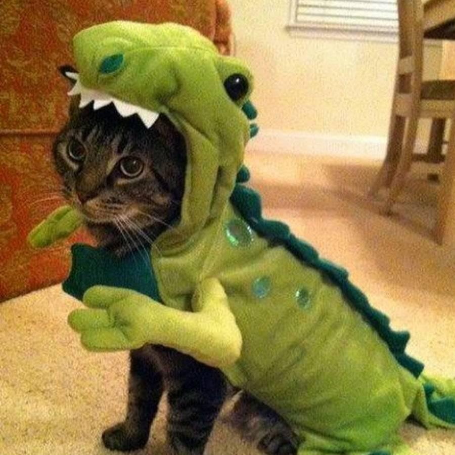 alligator-cat