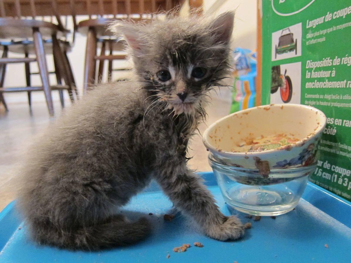 messy kitty