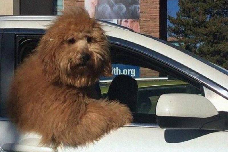 big-fluff-dog