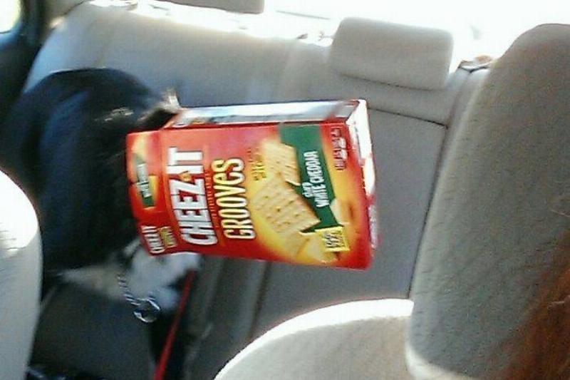 cheezits-dog