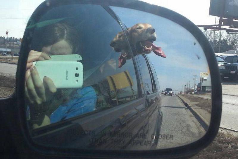 dog-tongue-car