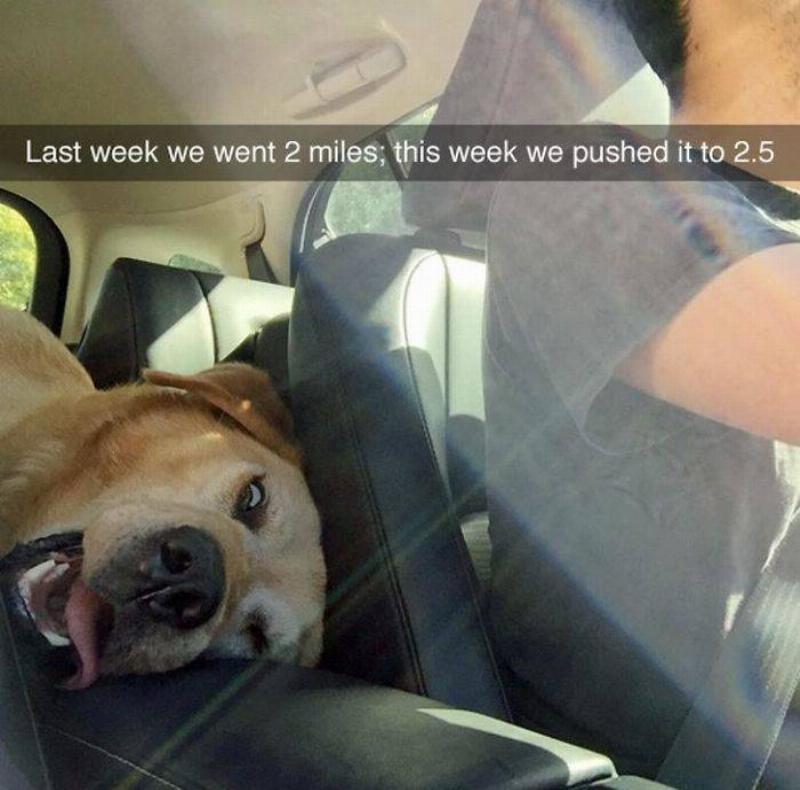 dog-walk-exhausted
