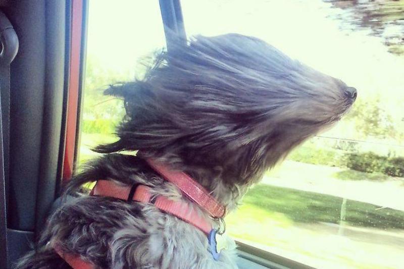 furr-in-the-wind