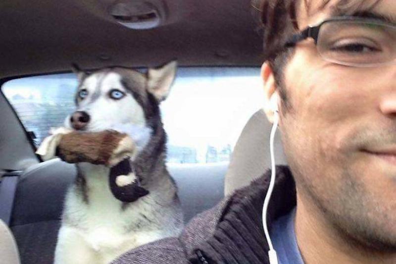 husky-backseat