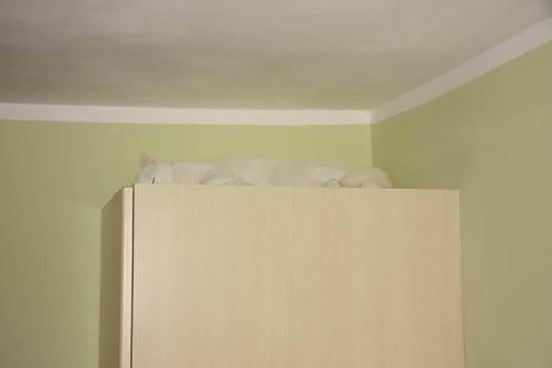 camo-cat-28