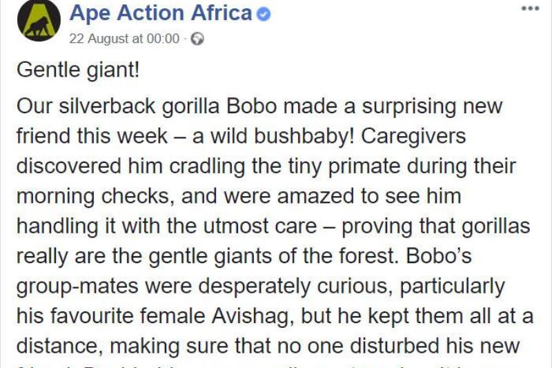 a facebook post talking about Bobo and the bush baby