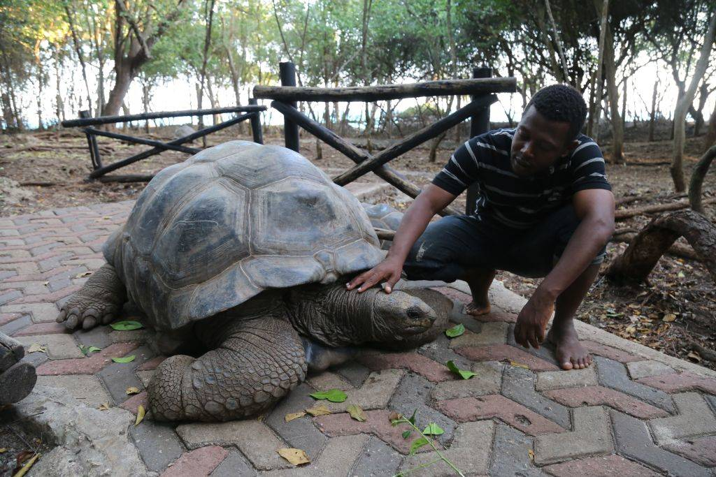 A man caresses a giant tortoise