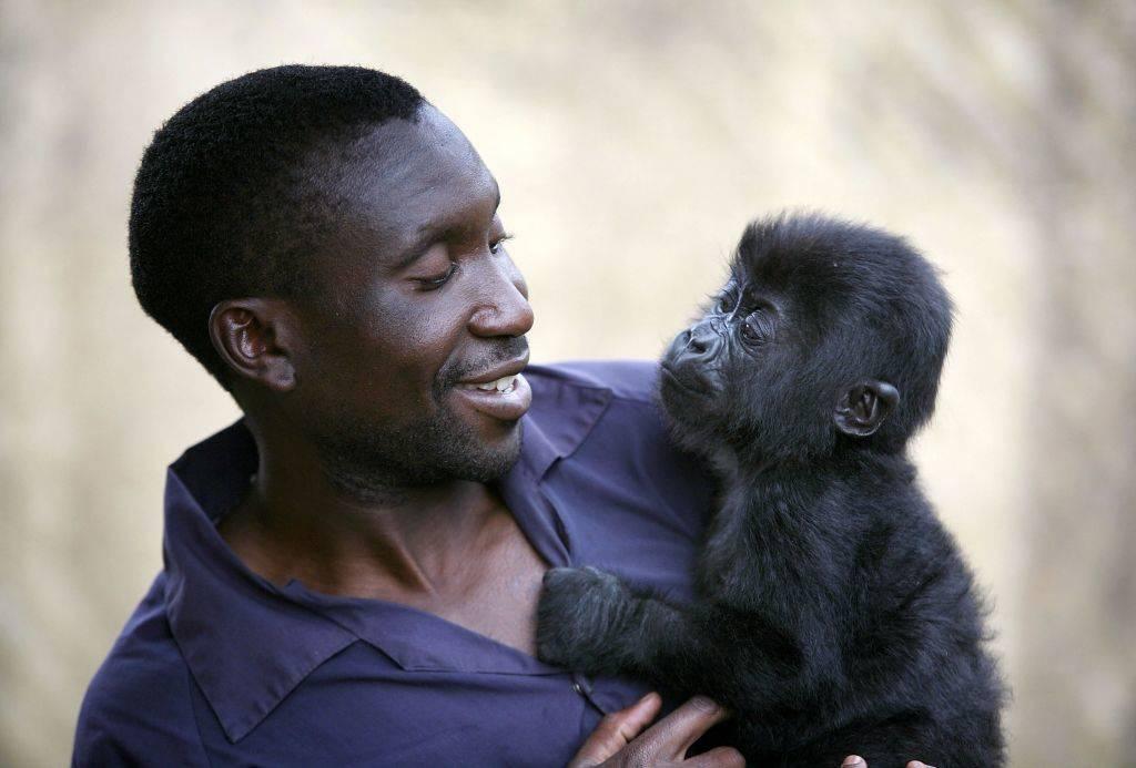 a man holding a baby gorilla