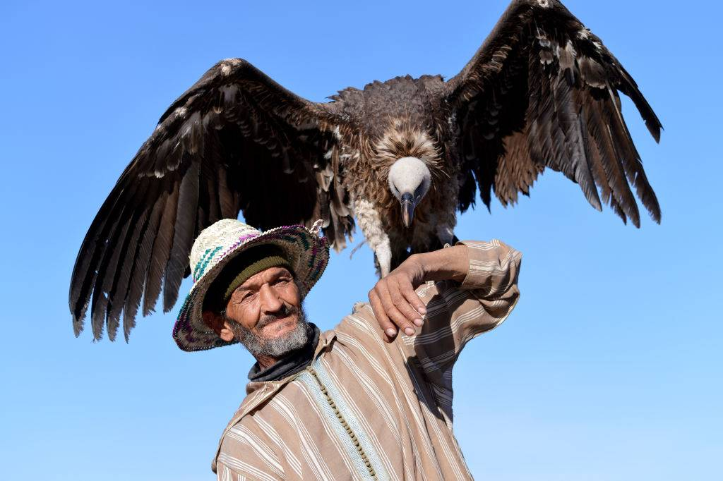 An elderly Moroccan man lets himself be photographed with a vulture