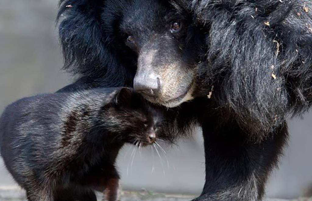 bear4-32214