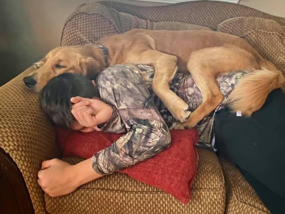 gunner-therapy-dog