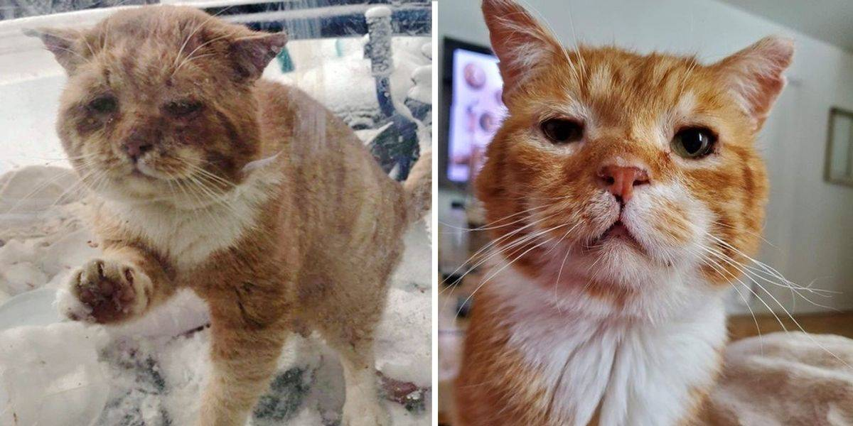 Two photos show Aslan then and now.