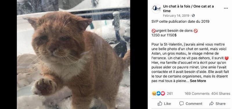 The Un chat à la fois Facebook page posts a photo of Aslan and asks for donations.