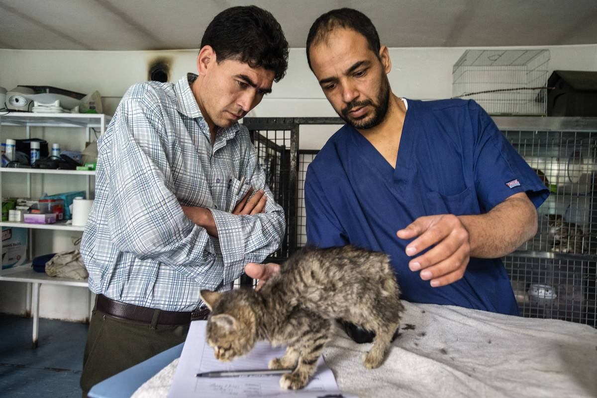 Mike Was A Hero And The Tabby Was Recovering