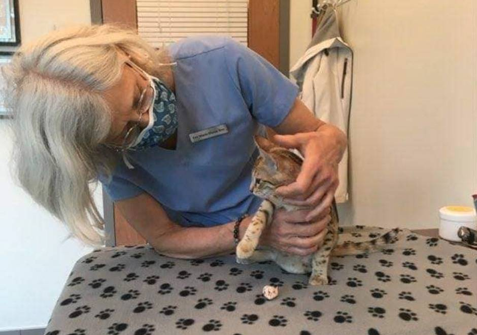 A vet from Un Chat à la Fois examines a cat.