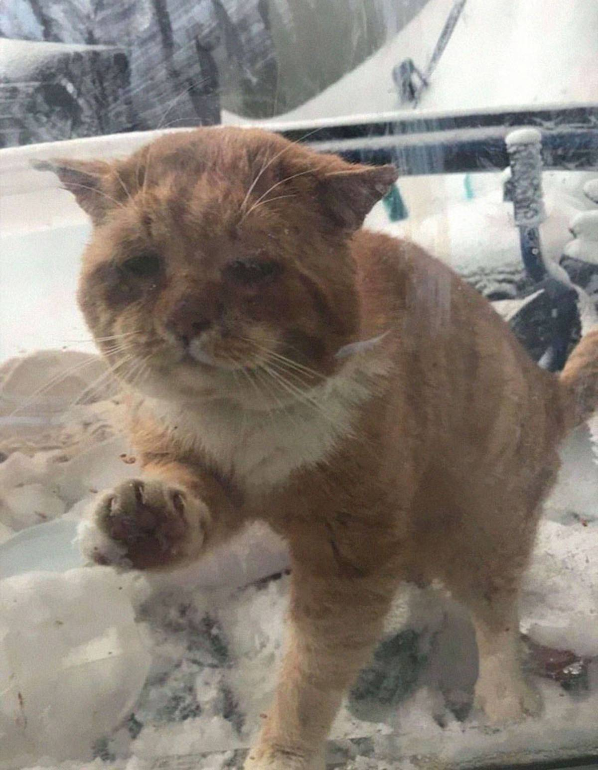 A lone cat claws at a window in the snow.