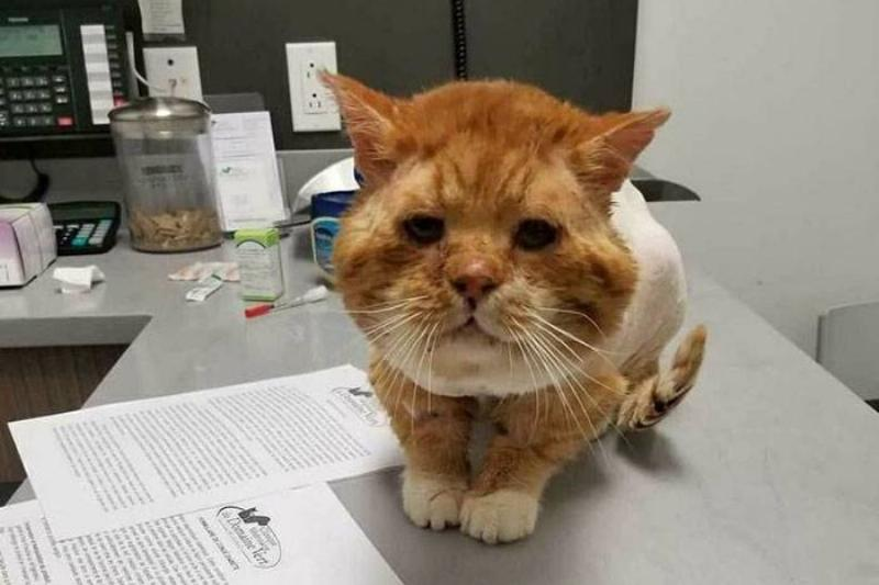 Aslan sits on an exam table with reports of his health checkup.