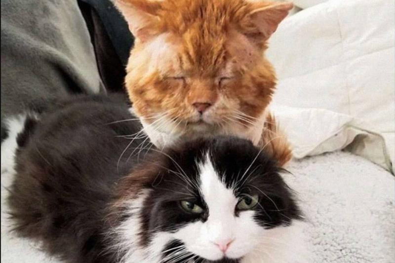 Aslan appears drowsy as he sits near Cleo the cat.