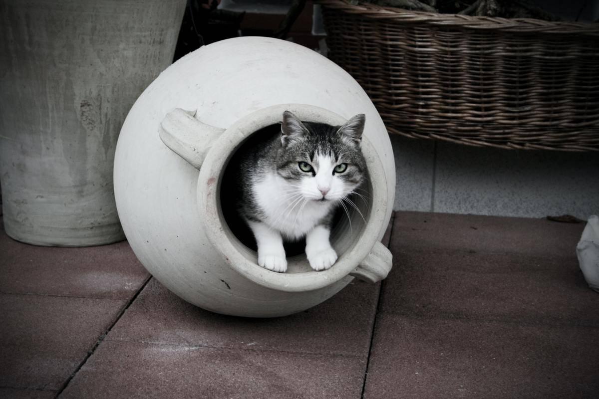 cat-in-a-pot