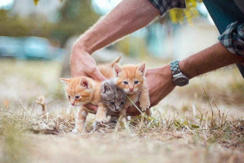 kitten-siblings