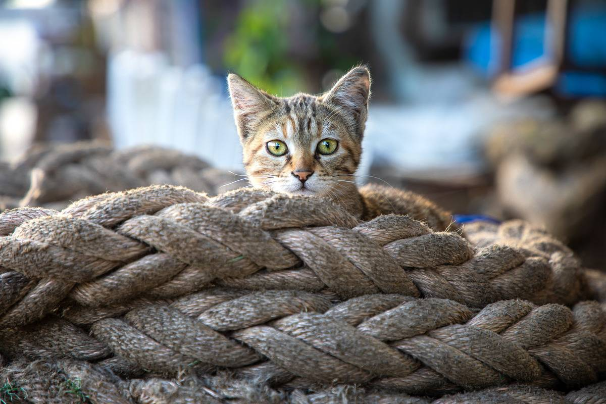 A cat peeks out from behind a pile of ropes.