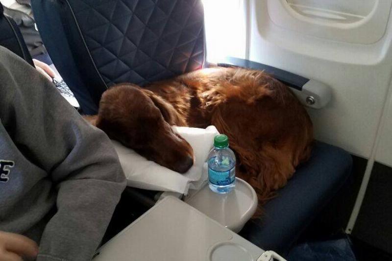 Pillow: Check. Water Bottle: Check. Nap Time: Check