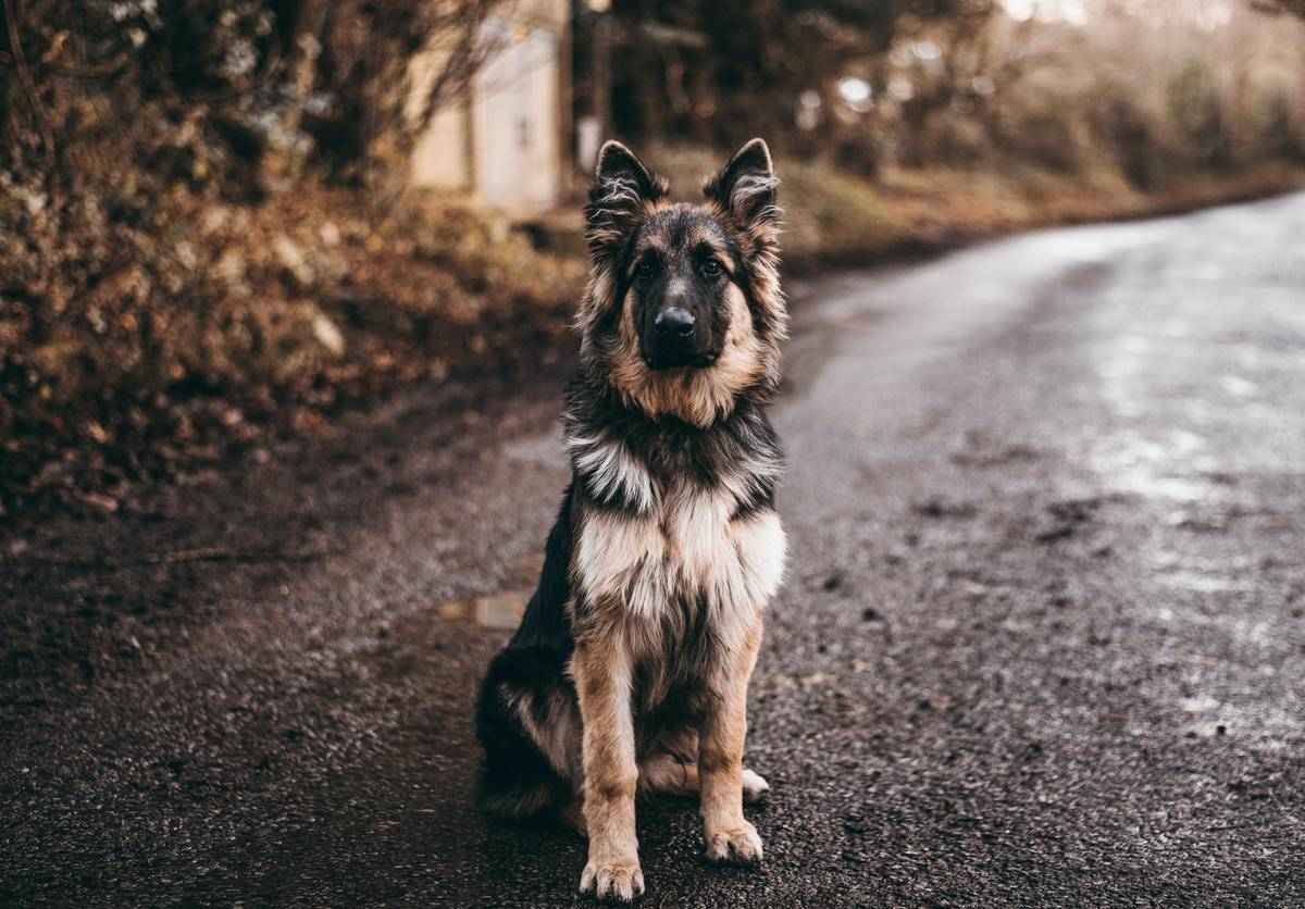 dog-in-road