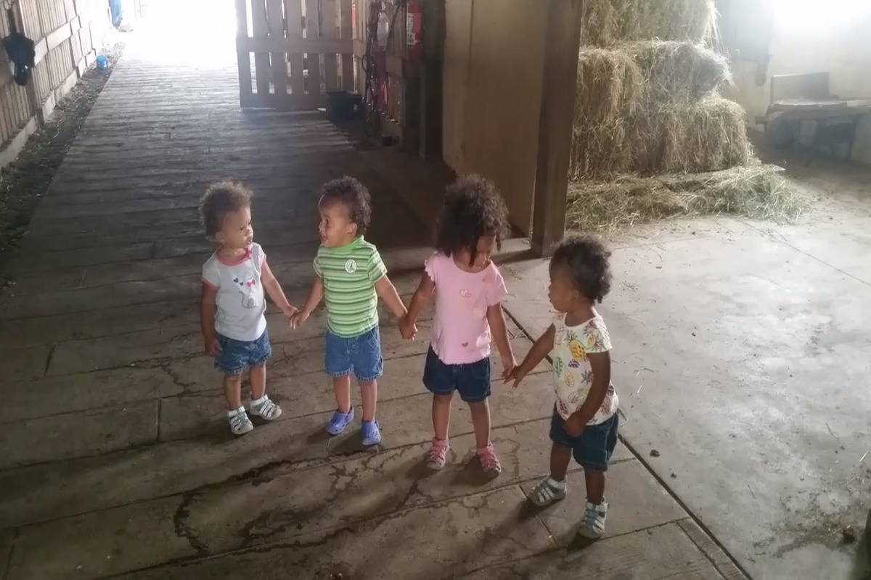 The four older Kosinski twins hold hands while walking through a barn.
