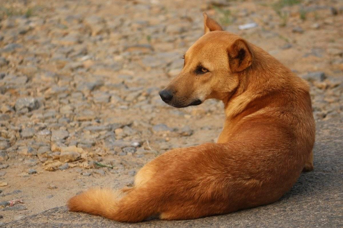stray-dog-4075095_1280