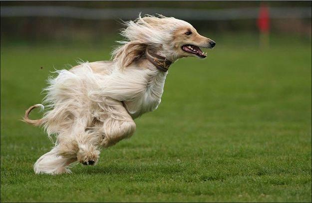 Dog Or Road Runner?