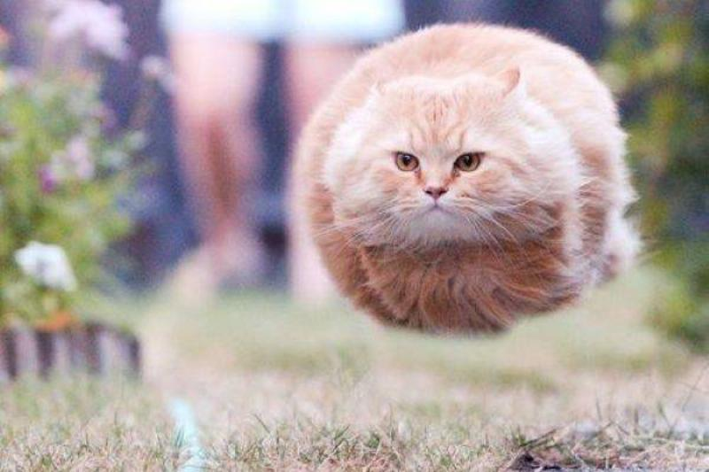 Hover-Cat Preparing For Liftoff