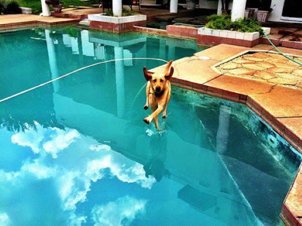 Saint Dog Running On Water