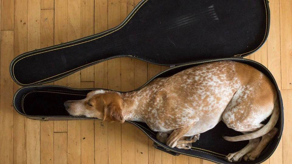 animal-small-spaces-11