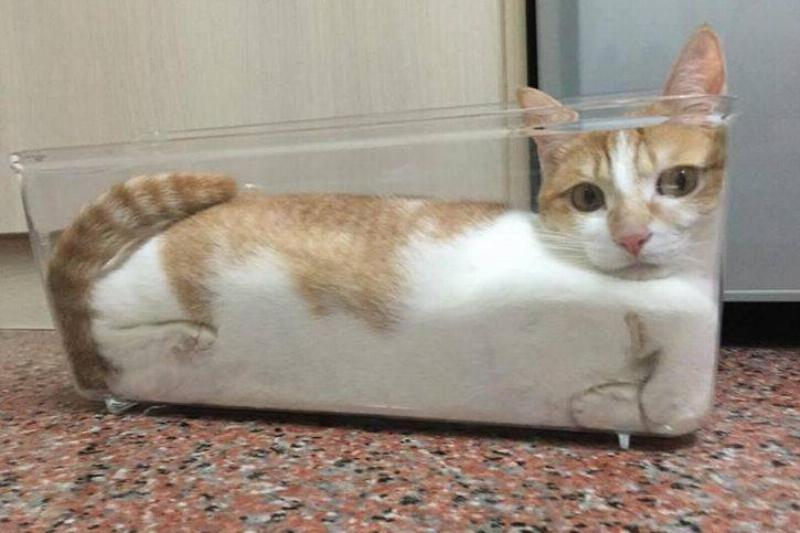 animal-small-spaces-6
