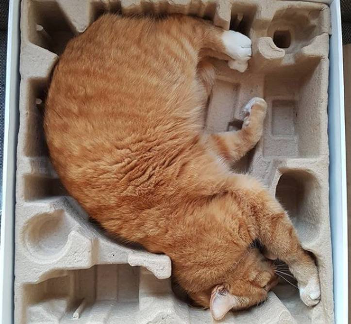 animal-small-spaces-7