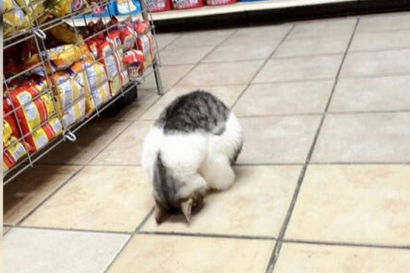 cat-in-store-87407