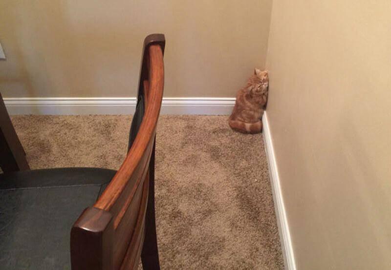 corner-cat-87336