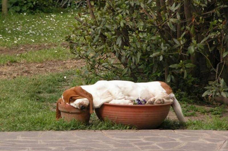 hound-in-pots-21411-24045